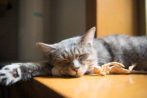 Kat sover i solen
